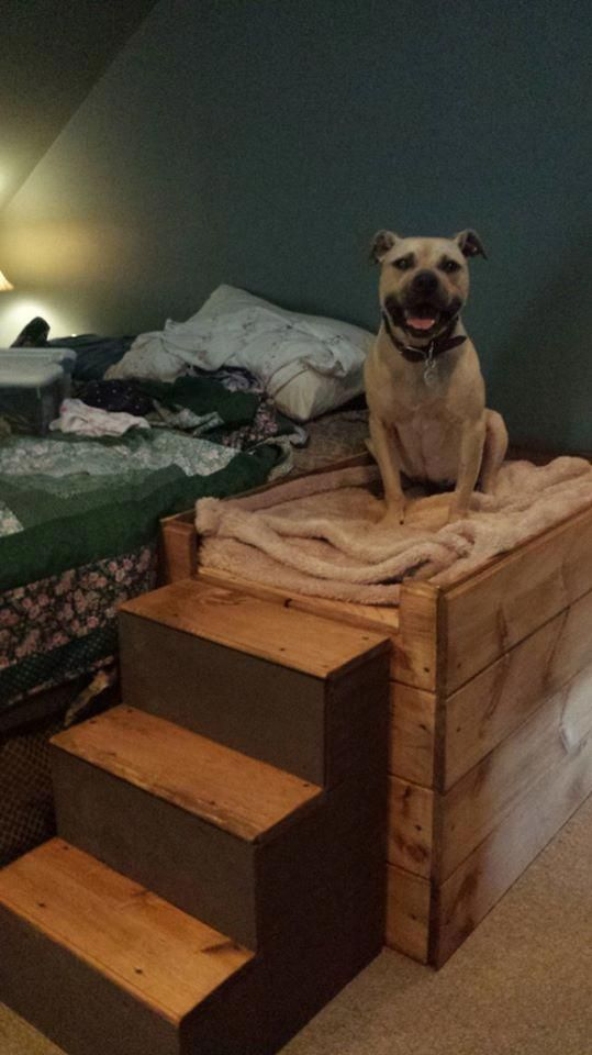 Bed Frame With Built-In Dog Bed