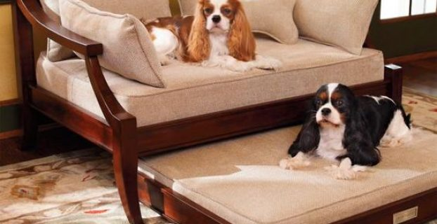 Best Dog Trundle Beds