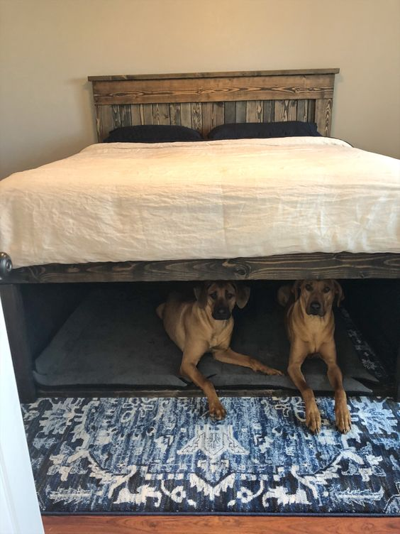 Human Beds with Dog Bed Underneath