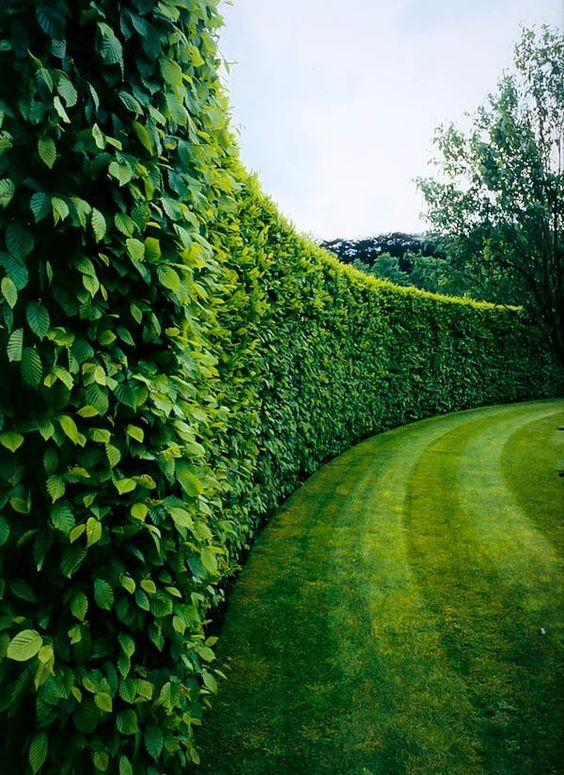Plants You Can Grow Instead Of A Fence