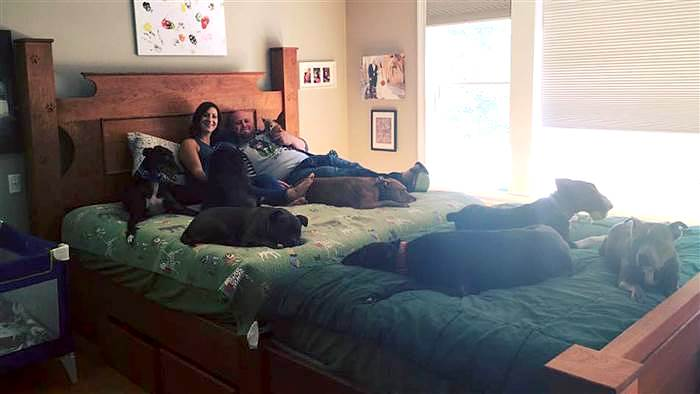 King Size Bed With Dog Bed Built-In