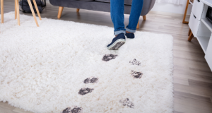 Best Ways To Remove Stains From Carpets